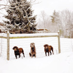 3 dogs / Snowmaggedon