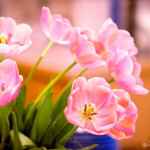 Mother's Day Weekend Photo Gallery