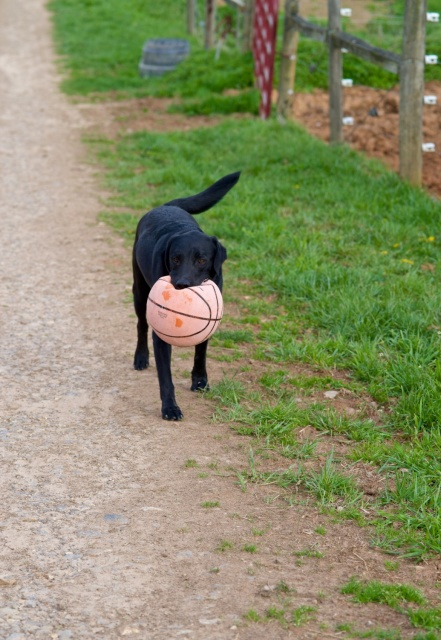 Biltmore Estate: Aubrey Cecil's sweet black lab