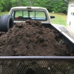 yummy composted horse poop